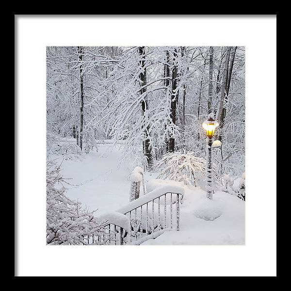 Winter Framed Print featuring the photograph Winter by Trevor Slauenwhite