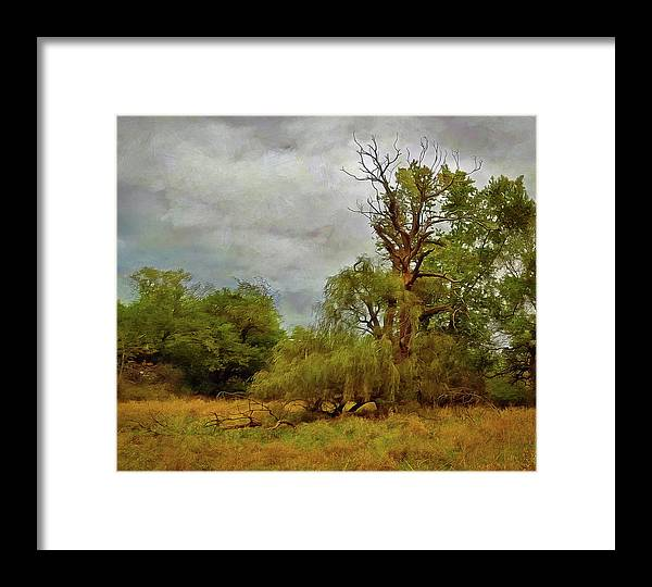 Weeping Willow Tree Framed Print featuring the photograph Withering Willow by Cedric Hampton