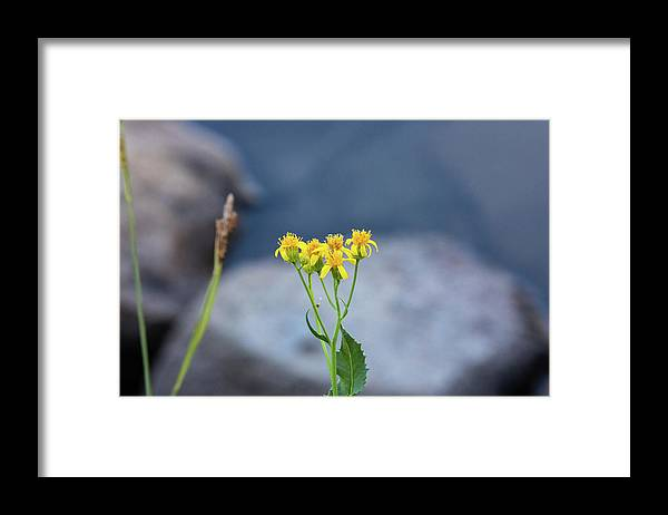 Wildflower Framed Print featuring the photograph Yellow by John Heywood