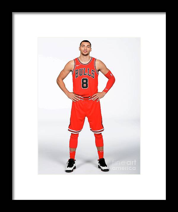 Media Day Framed Print featuring the photograph Zach Lavine by Randy Belice