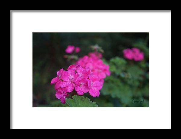Flower Framed Print featuring the photograph Zowee by Sandy Abbott