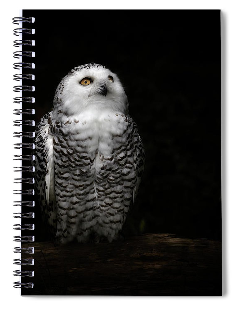 Animal Themes Spiral Notebook featuring the photograph An Owl by Kaneko Ryo