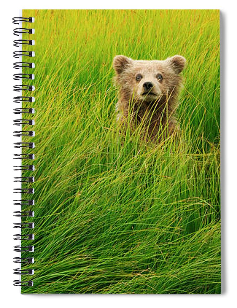 Brown Bear Spiral Notebook featuring the photograph Brown Bear Cub, Lake Clark National by Mint Images/ Art Wolfe