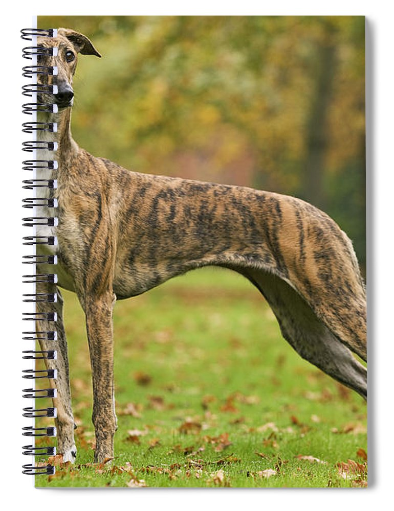Dog Spiral Notebook featuring the photograph Hungarian Greyhound by Jean-Michel Labat