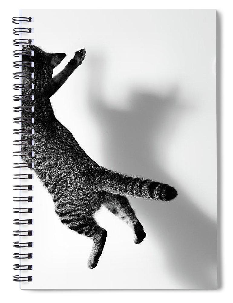 Pets Spiral Notebook featuring the photograph Jumping Cat by Akimasa Harada