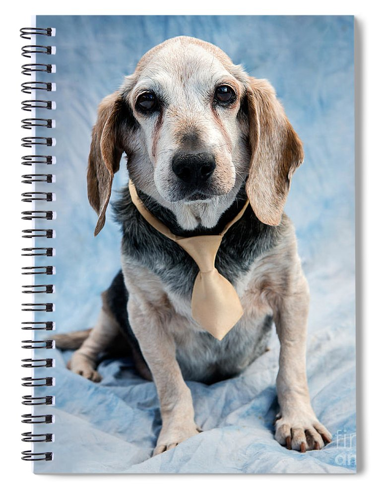 Beagle Spiral Notebook featuring the photograph Kippy Beagle Senior by Iris Richardson