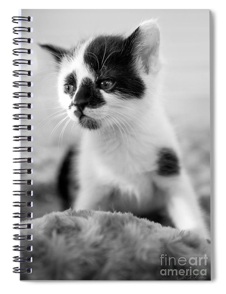 Iris Holzer Richardson Spiral Notebook featuring the photograph Kitten dreaming by Iris Richardson
