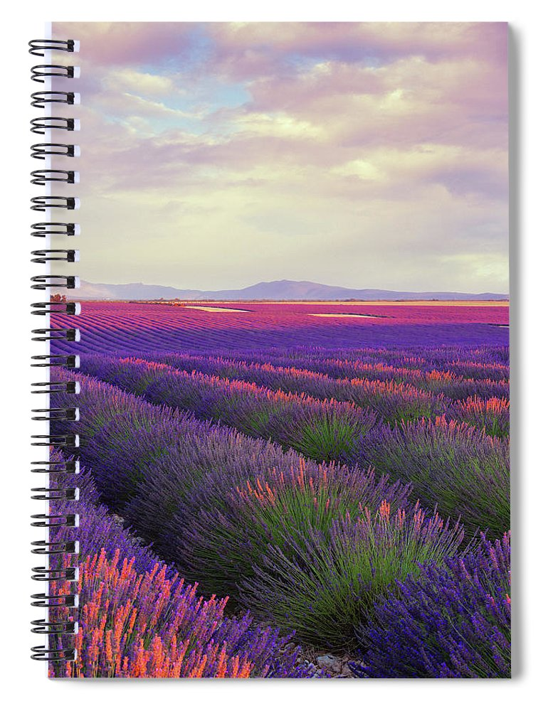 Dawn Spiral Notebook featuring the photograph Lavender Field At Dusk by Mammuth