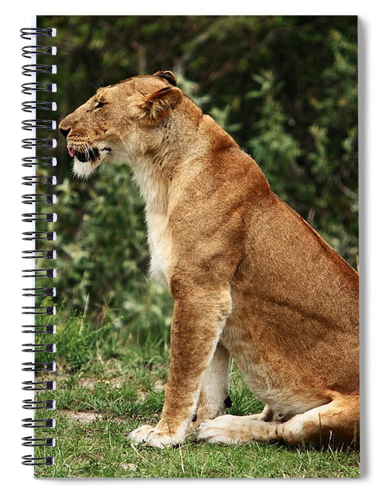Lion Spiral Notebook featuring the photograph Lioness On The Masai Mara by Aidan Moran