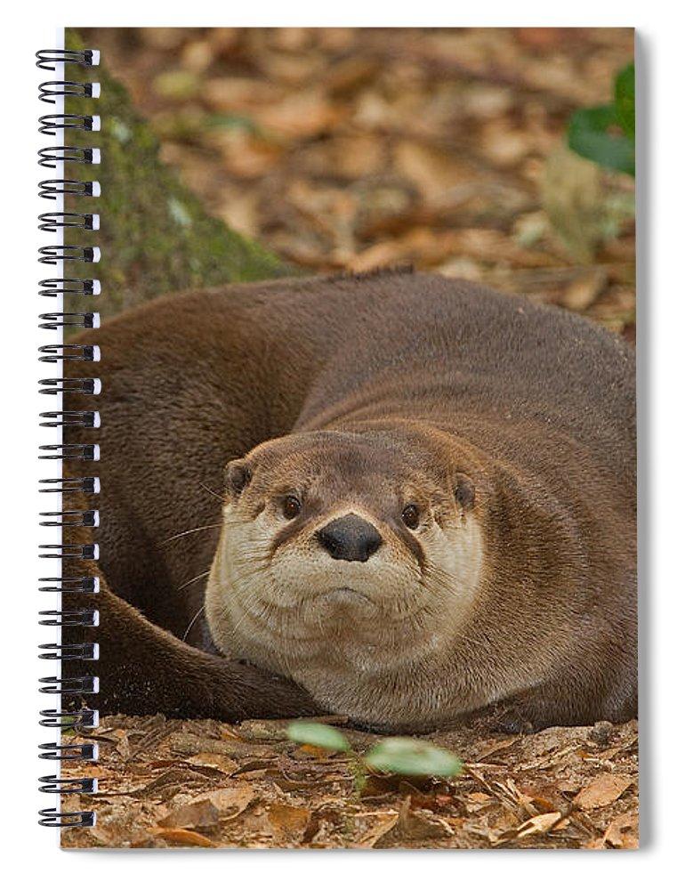 North American River Otter Spiral Notebook featuring the photograph North American River Otter by Millard H. Sharp
