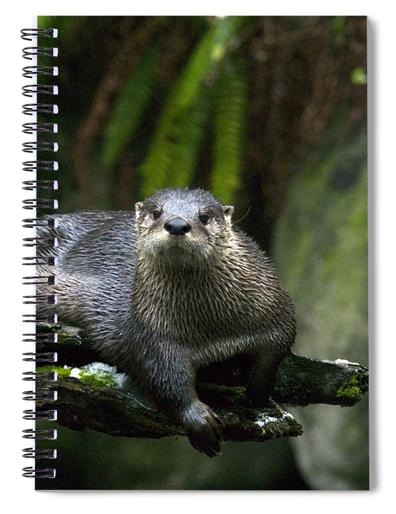 River Otter Spiral Notebook featuring the photograph River Otter by Mark Newman