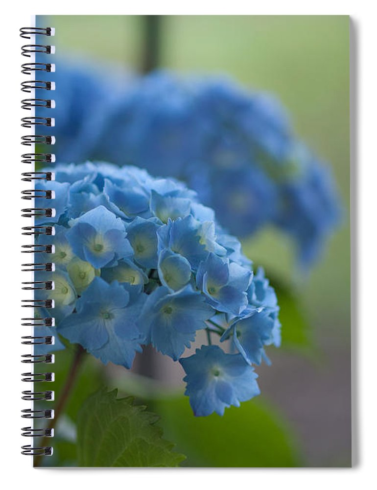 Hydrangea Spiral Notebook featuring the photograph Soft Blue Hydrangea by Mike Reid