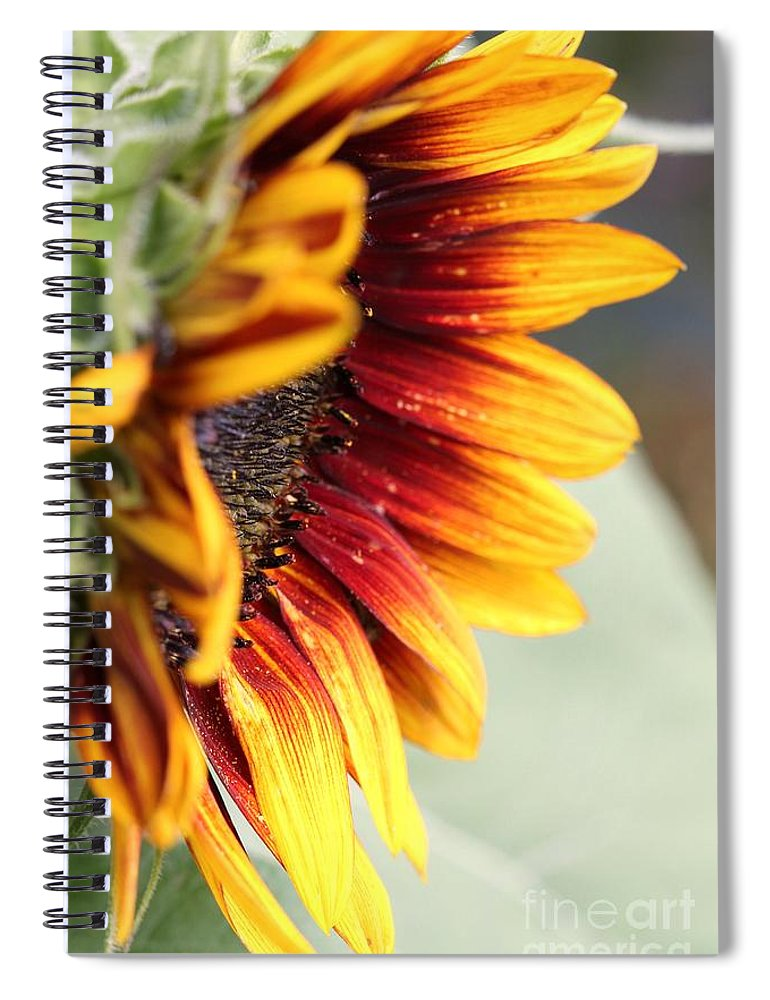 Mccombie Spiral Notebook featuring the photograph Sunflower Named The Joker by J McCombie