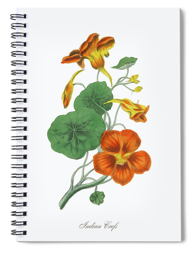 White Background Spiral Notebook featuring the digital art Victorian Botanical Illustration Of by Bauhaus1000