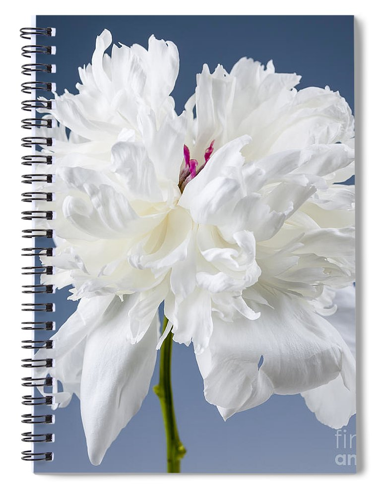 Peony Spiral Notebook featuring the photograph White Peony Flower by Elena Elisseeva