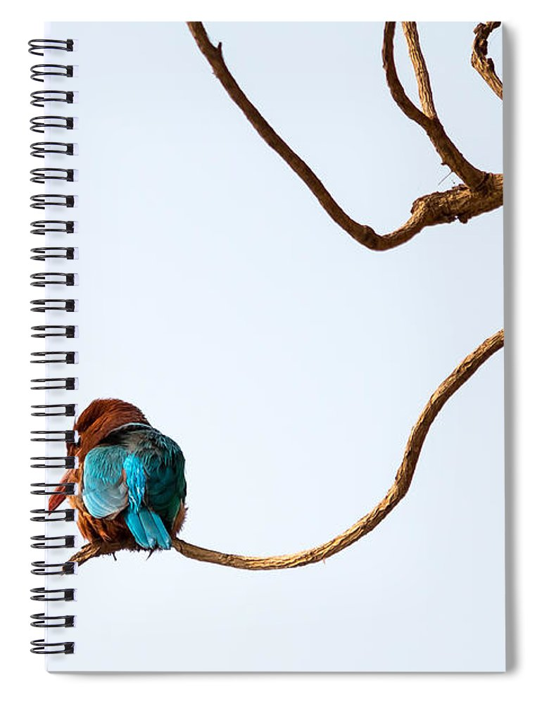 Smyrna Kingfisher Spiral Notebook featuring the photograph White-throated Kingfisher by Gaurav Singh