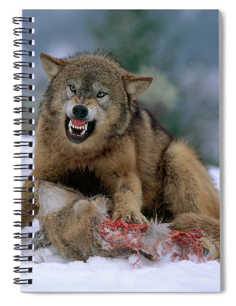 Gray Wolf Spiral Notebook featuring the photograph Timber Wolf 11 by Hans Reinhard
