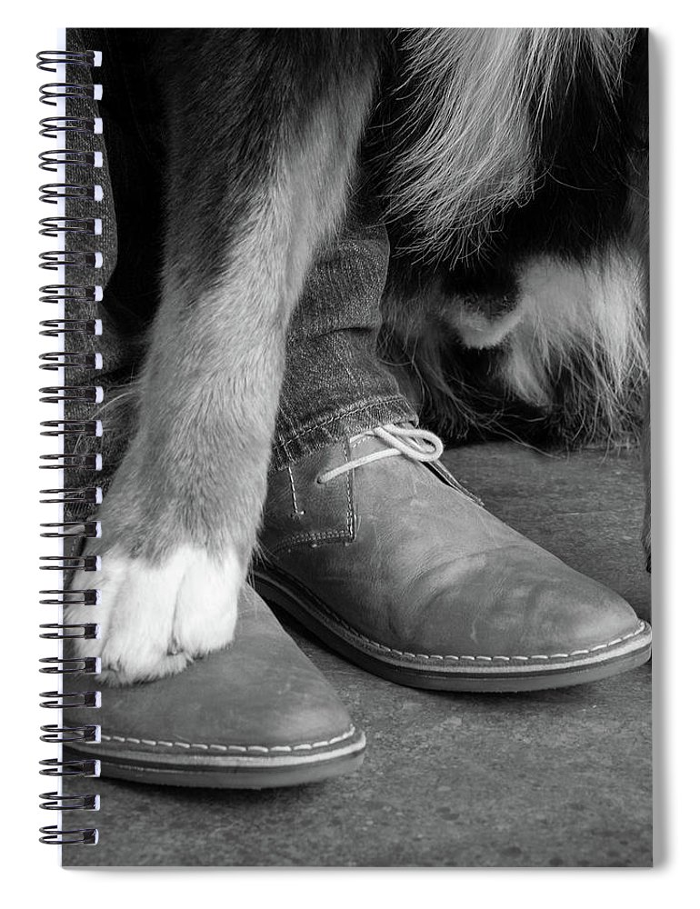 Photography Spiral Notebook featuring the photograph Portrait Of Bernese Mountain Dog 13 by Animal Images