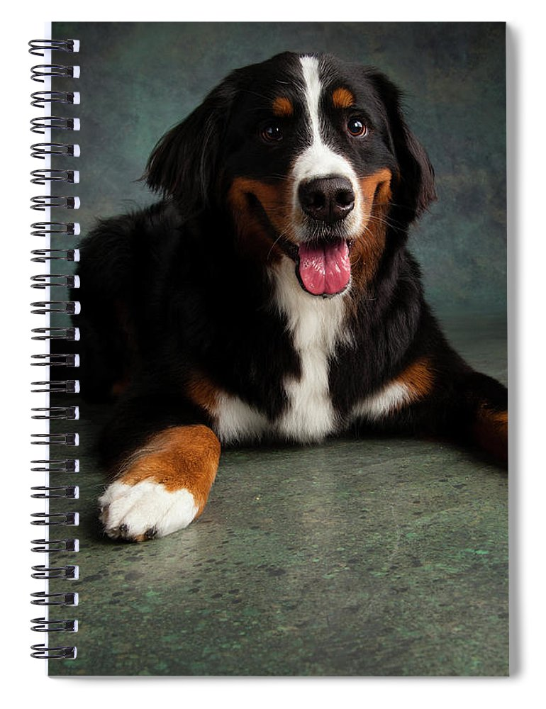 Photography Spiral Notebook featuring the photograph Portrait Of Bernese Mountain Dog 17 by Animal Images