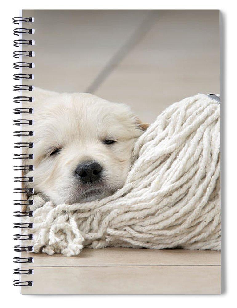 Dog Spiral Notebook featuring the photograph Golden Retriever Puppy by John Daniels