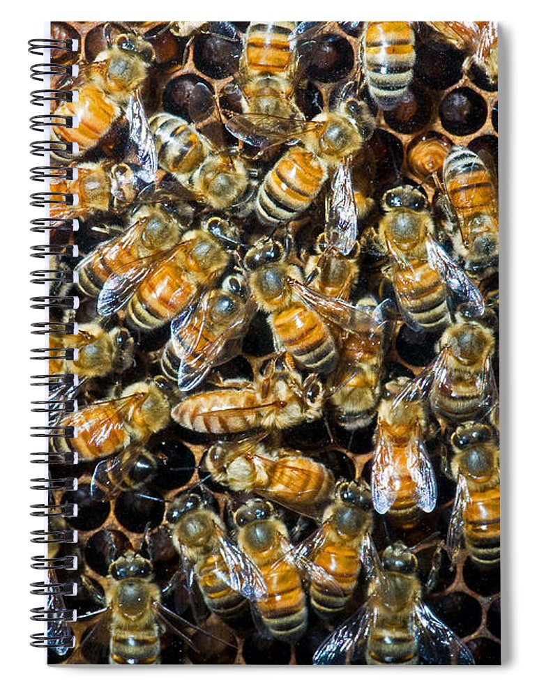 Insect Spiral Notebook featuring the photograph Honey Bees In Hive by Millard H. Sharp