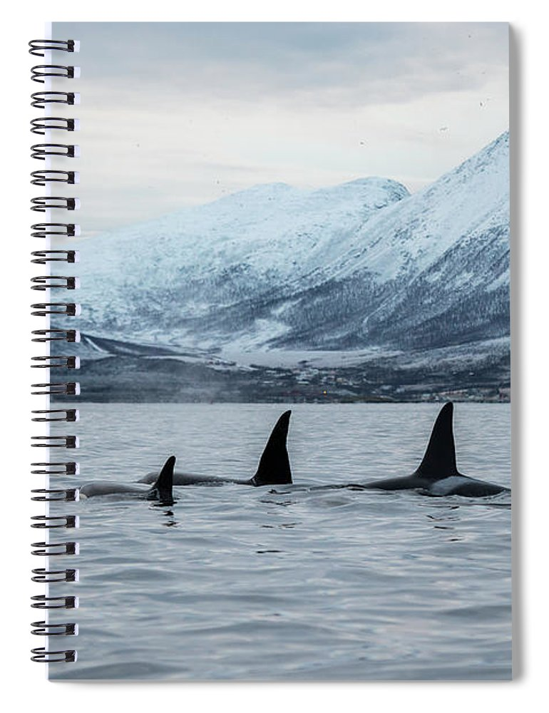 Snow Spiral Notebook featuring the photograph 2 Big 2 Small by By Wildestanimal