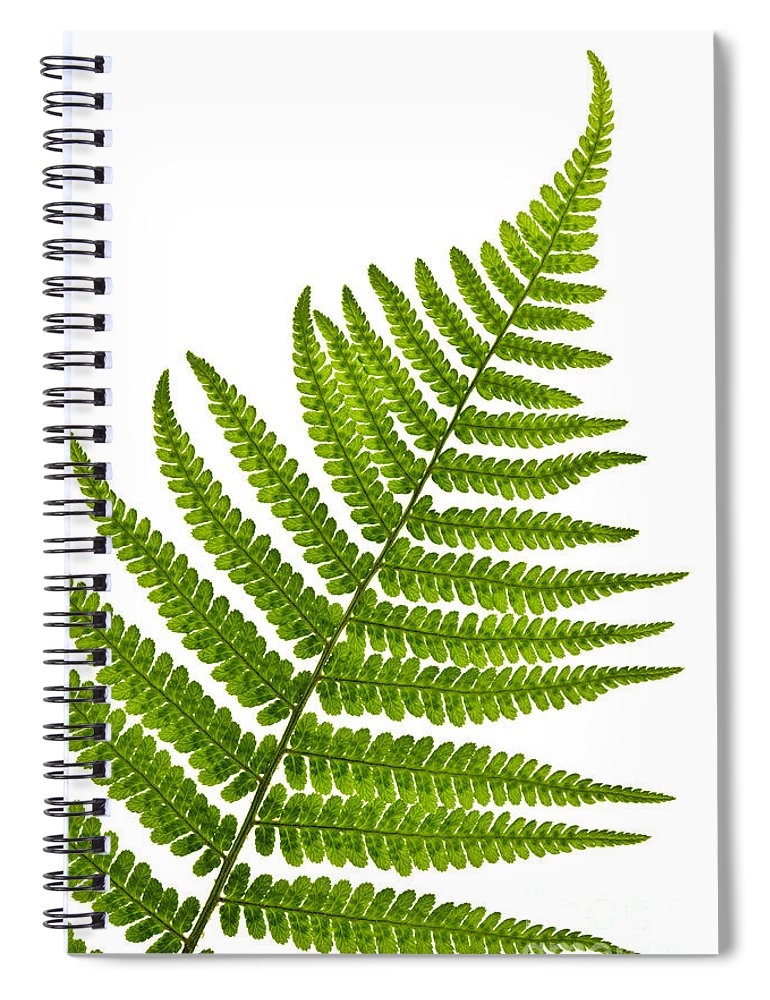 Fern Spiral Notebook featuring the photograph Fern Leaf by Elena Elisseeva