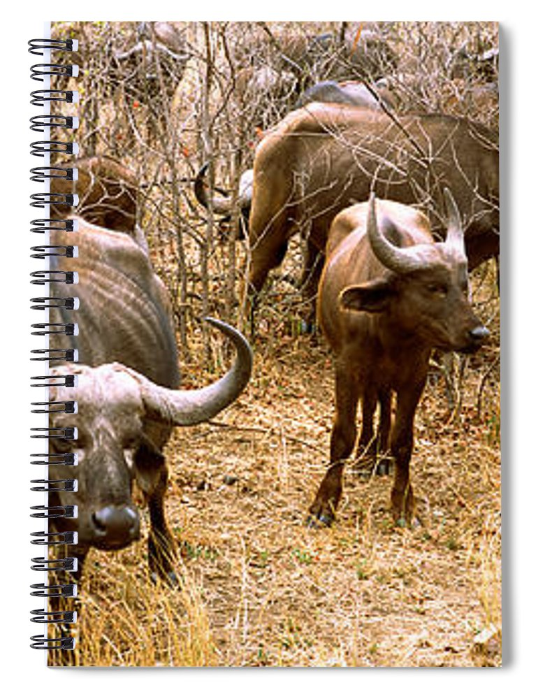Photography Spiral Notebook featuring the photograph Herd Of Cape Buffaloes Syncerus Caffer by Panoramic Images