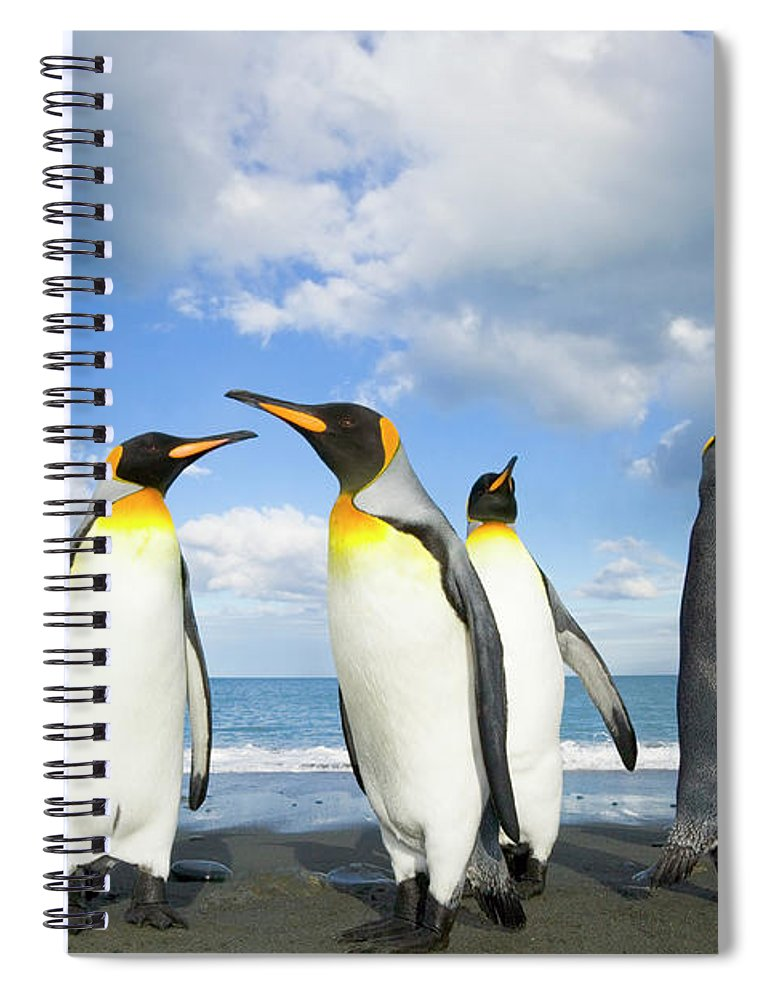 00345362 Spiral Notebook featuring the photograph King Penguins In Gold Harbour by Yva Momatiuk John Eastcott