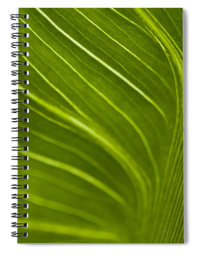 Beauty Spiral Notebook featuring the photograph Calla Lily Stem Close Up by Jim Corwin
