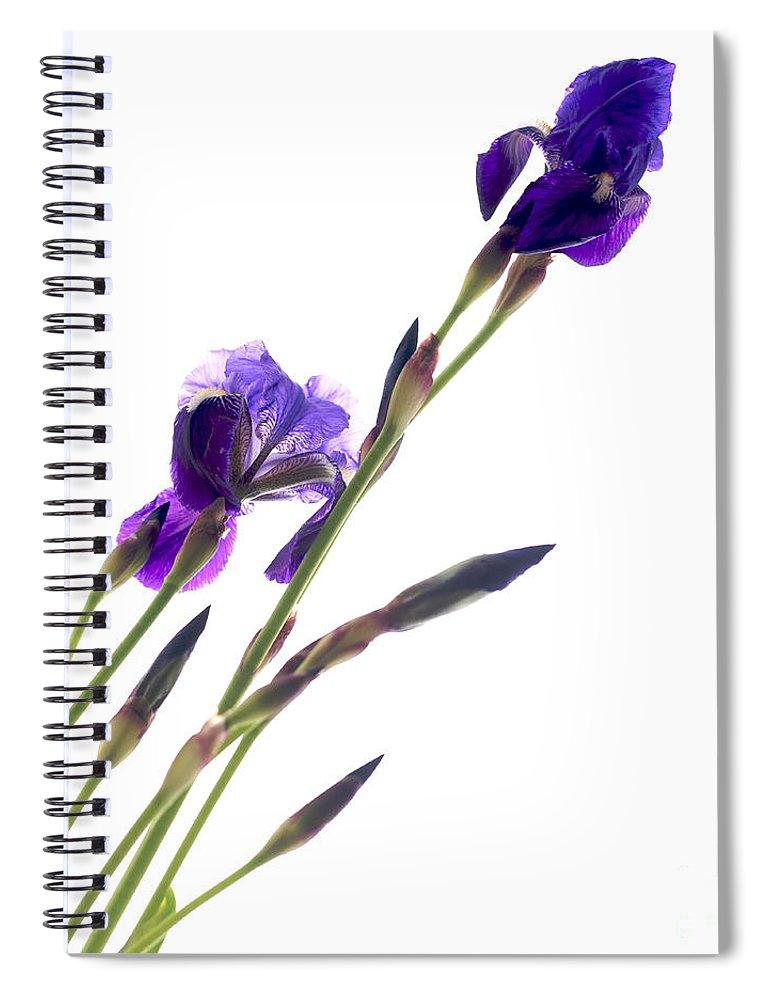 Simplicity Spiral Notebook featuring the photograph Iris by Bernard Jaubert