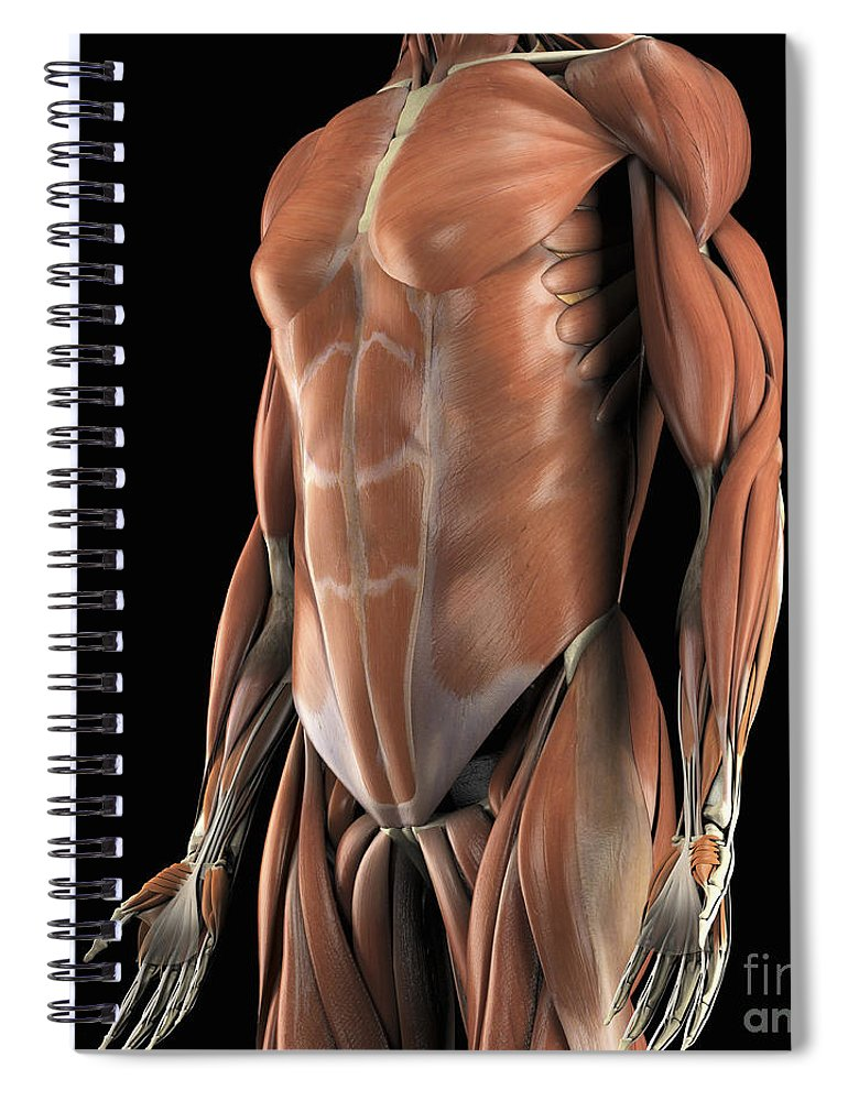 Muscles Of The Upper Body Spiral Notebook For Sale By Science Picture Co
