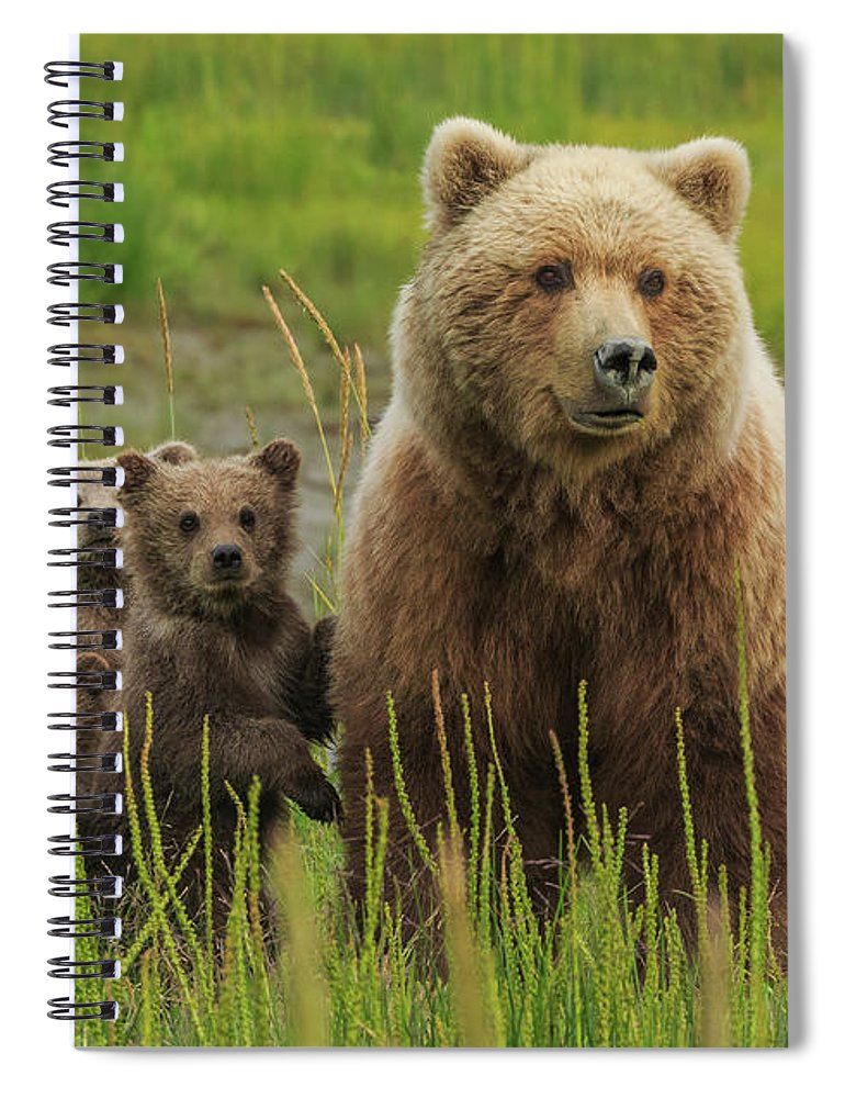 Brown Bear Spiral Notebook featuring the photograph Brown Bear Sow And Cubs, Lake Clark by Mint Images/ Art Wolfe
