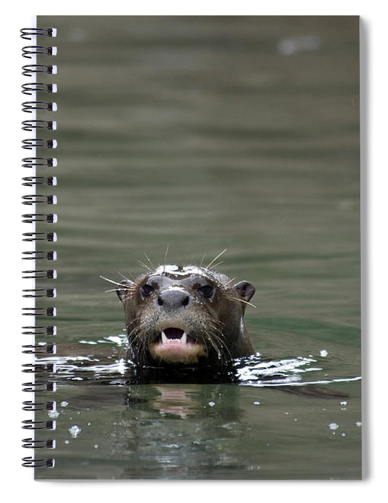 Animal Spiral Notebook featuring the photograph Giant River Otter by Mark Newman