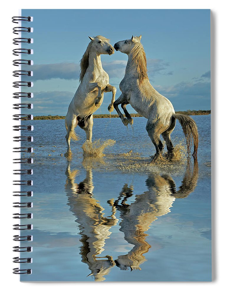 Animals In The Wild Spiral Notebook featuring the photograph Pair Of Camargue Horse Stallions by Adam Jones