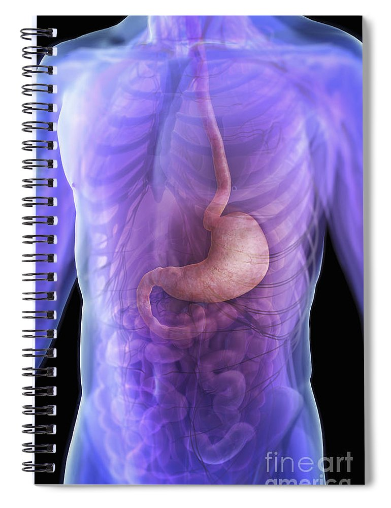 Transparent Spiral Notebook featuring the photograph The Stomach by Science Picture Co