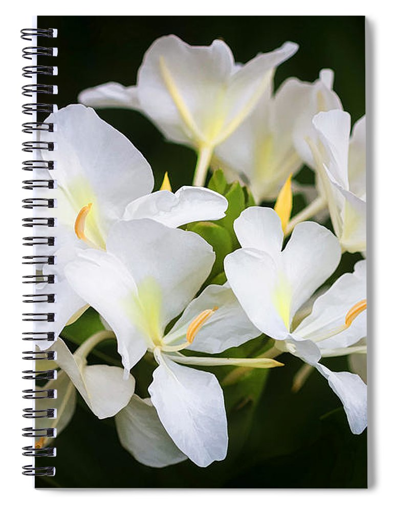 White Ginger Flowers H Coronarium Painted Spiral Notebook For Sale