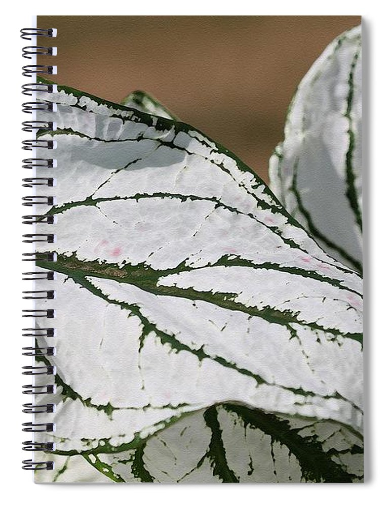 Caladium Spiral Notebook featuring the painting Caladium Named White Christmas by J McCombie