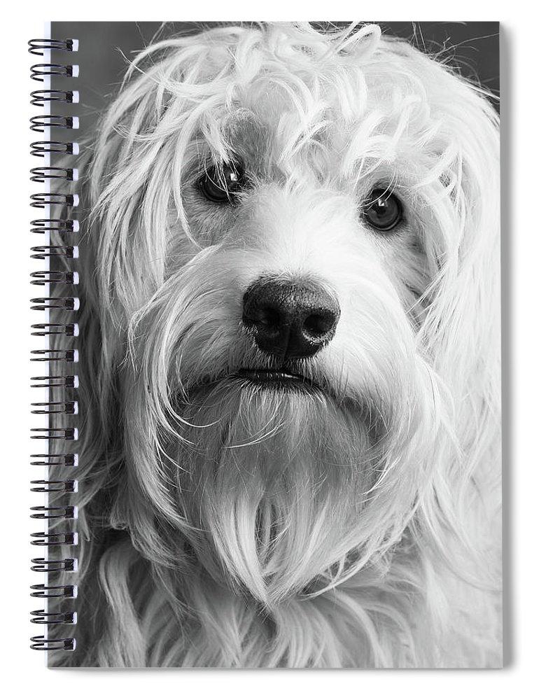 Portrait Of A Mini Golden Doodle Dog Spiral Notebook