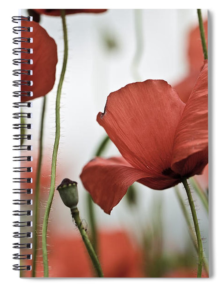 Poppy Spiral Notebook featuring the photograph Red Poppy Flowers by Nailia Schwarz