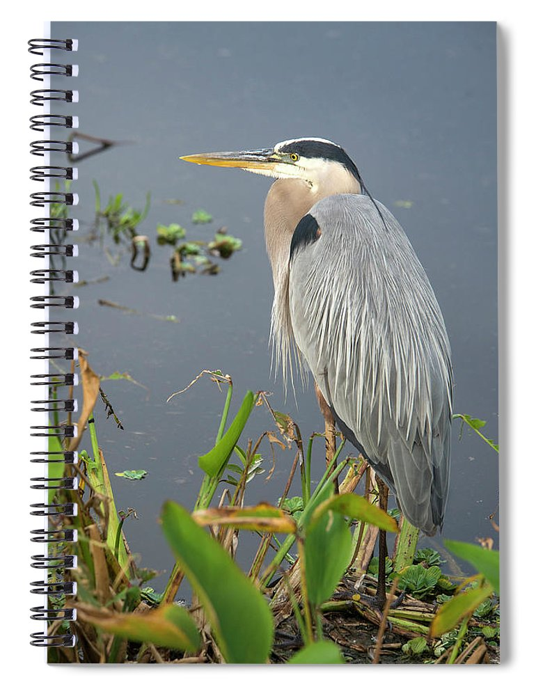 Standing Water Spiral Notebook featuring the photograph Great Blue Heron by Mark Newman