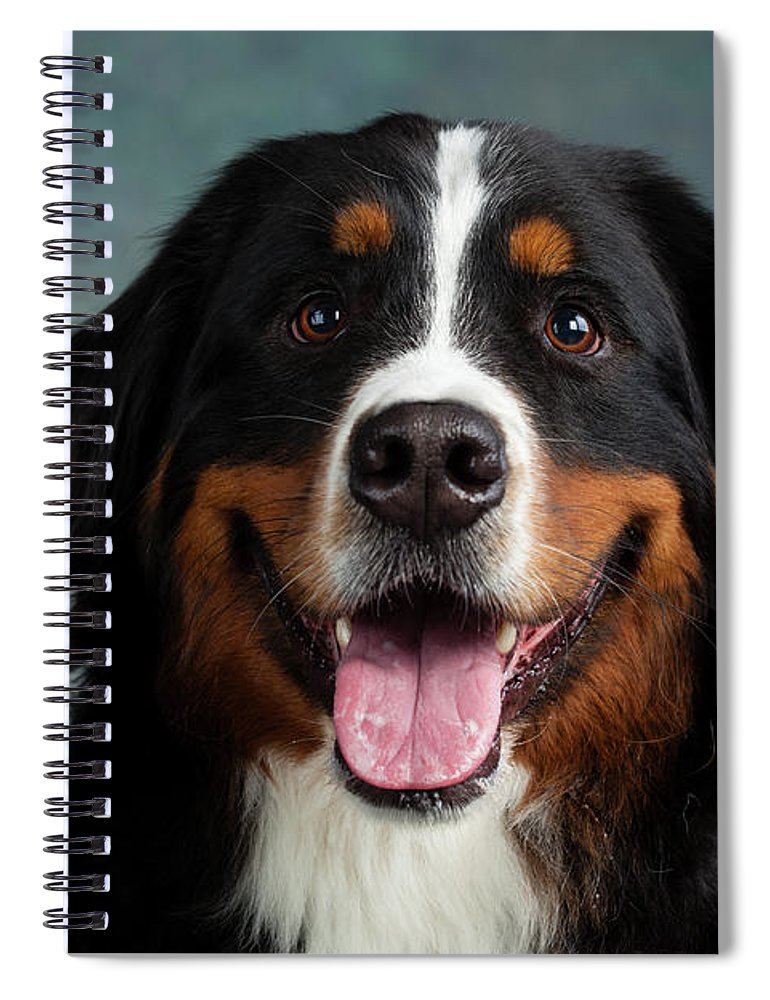 Photography Spiral Notebook featuring the photograph Portrait Of Bernese Mountain Dog 7 by Animal Images