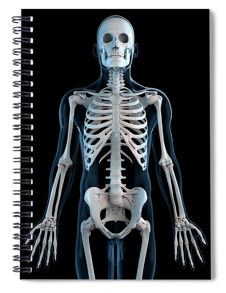 Physiology Spiral Notebook featuring the digital art Human Skeleton, Artwork by Sciepro