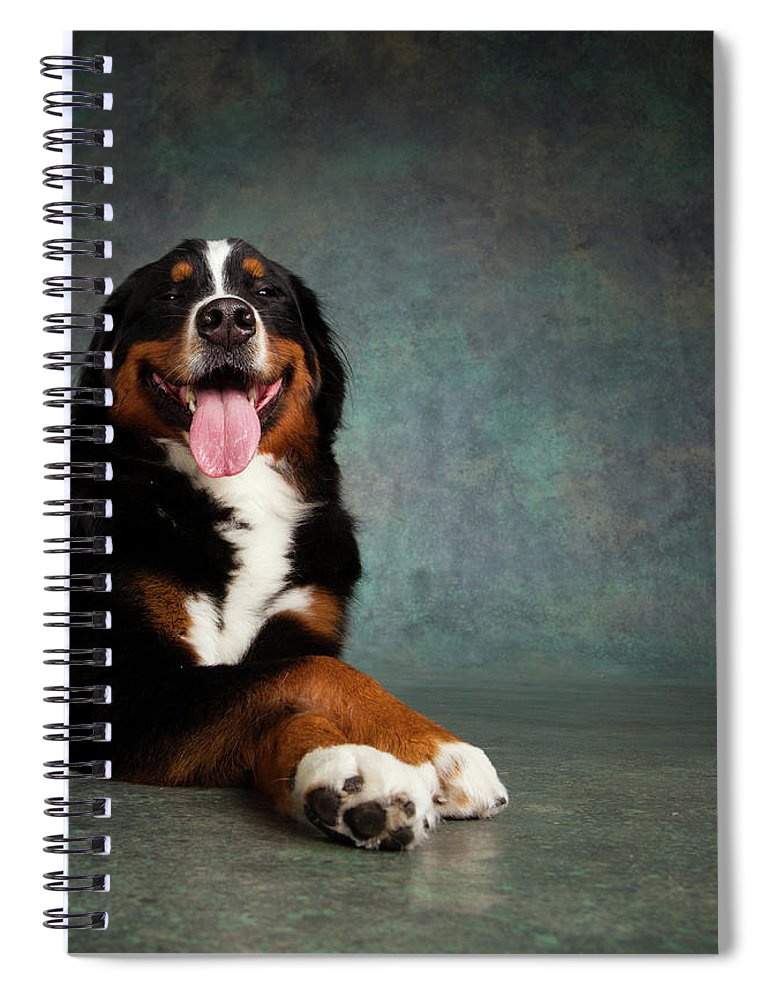 Photography Spiral Notebook featuring the photograph Portrait Of Bernese Mountain Dog by Animal Images