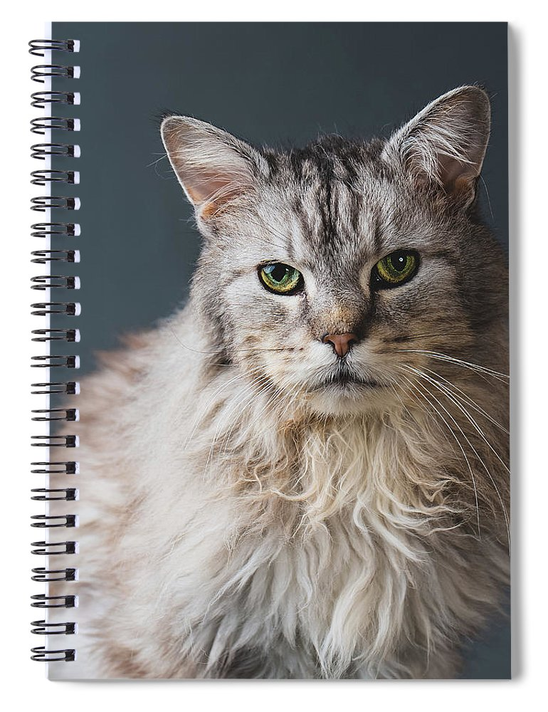 Pets Spiral Notebook featuring the photograph Fortunate Tails by Matt Porteous