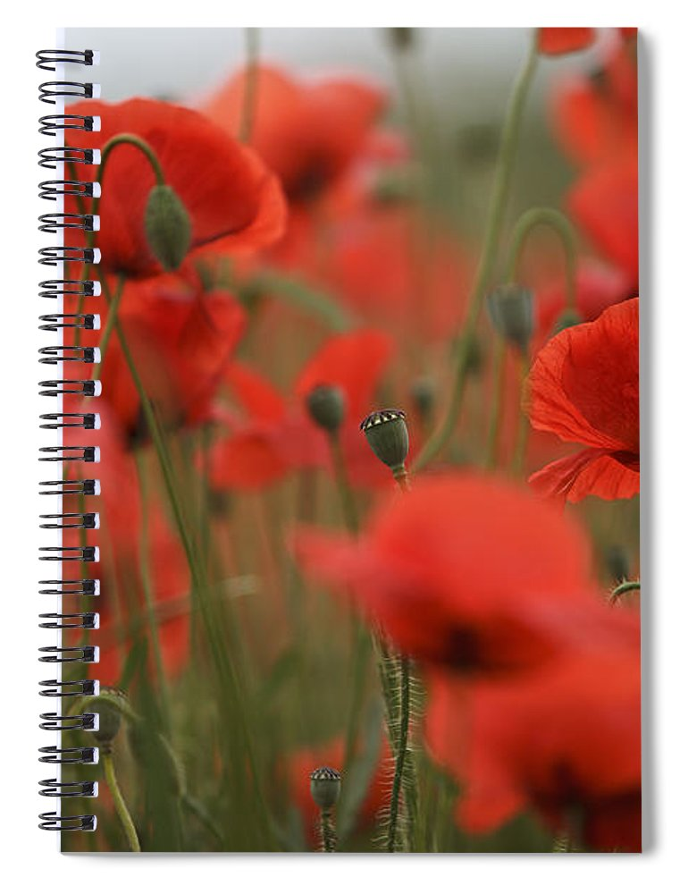 Poppy Spiral Notebook featuring the photograph Red by Nailia Schwarz