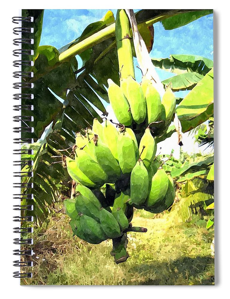 Banana Field Pictures