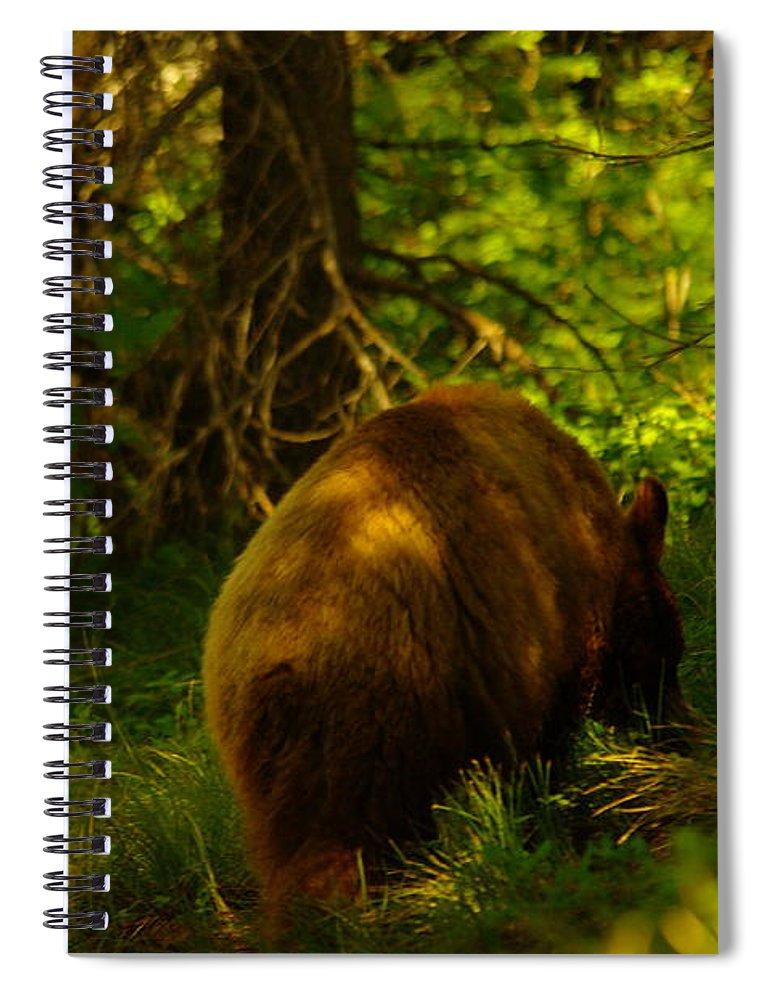 Bear Spiral Notebook featuring the photograph A Little Brown Bear by Jeff Swan