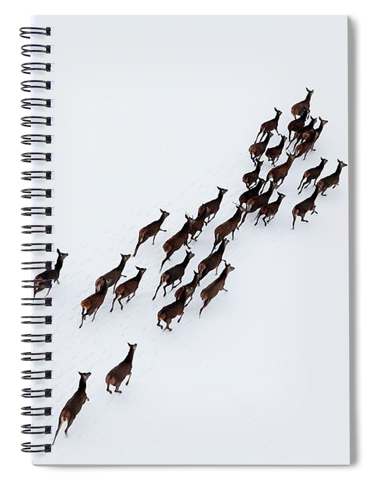 Scenics Spiral Notebook featuring the photograph Aerial Photo Of A Herd Of Deer Running by Dariuszpa