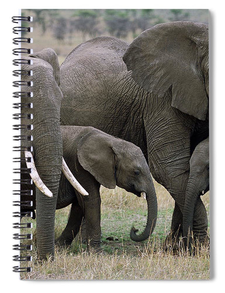 00344769 Spiral Notebook featuring the photograph African Elephant Females And Calves by Yva Momatiuk and John Eastcott